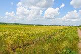 Tavriysky blooming steppe in summer