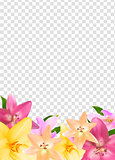 Summer Natural Floral Frame on Transparent Background Vector Illustration