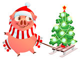 Pink pig symbol of 2019 year. Fun pig sled Christmas tree spruce