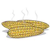 Isolate boiled corn ears with steam