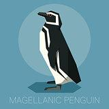 Flat Magellanic Penguin