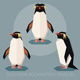 Flat southern rockhopper penguin