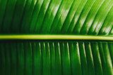 Tropical leaf macro