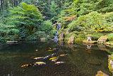 Koi Fish in Waterfall Pond at Japanese Garden