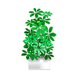 Spotted plant in a white pot. Element of home decor. The symbol of growth and ecology.