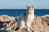 Hungry cat waiting on stone near a sea for fishing boats to return, hoping get some food