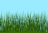 Grass and Blue Sky Seamless