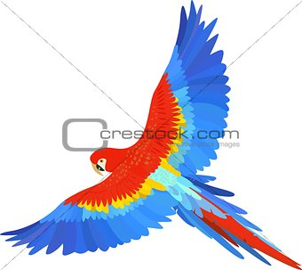 Ara macaw parrot spread wings vector