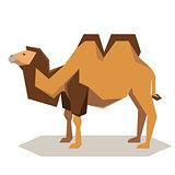 Flat geometrical Bactrian camel