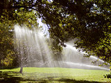 Sunlight shines through trees and water from a sprinkler