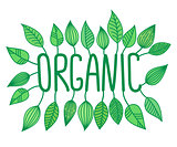 Green organic sign in with growing leaves, vector label and tag, fresh food concept sticker