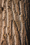 Textured tree bark