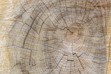 Cut through tree section with rings and cracks landscape