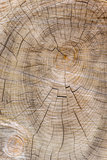 Cut through tree section with rings and cracks portrait