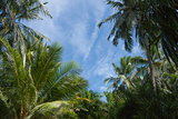 Green palm trees against blue sky and white clouds on the paradise island of Maldives at the sunny day