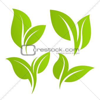 Green leaf set. Eco design