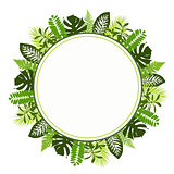 Tropical leaves background with white round banner. Palm,ferns,monsteras
