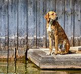 Sad dog sitting at wooden pier