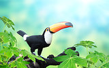 Horizontal banner with beautiful colorful toucan bird