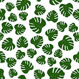 seamless of green monstera leaves