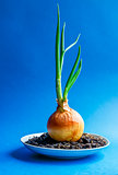 Green onion with root isolated on blue