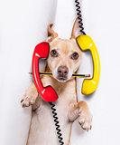 burnout  dog at work