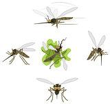 Mosquito Cartoons