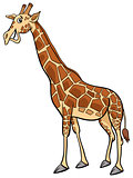 giraffe animal character cartoon illustration