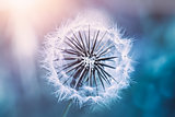 Gentle dandelion flower