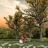 red tricycle on a green field
