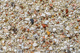 Pebble dash wall macro