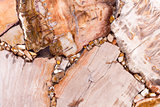 Elegant petrified wood texture in light brown tone with unusual