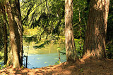 Summer pond in the woods.
