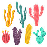 Various Colorful Cactus Plant Designs