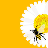 Daisy flower with bee background