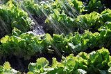 rain waters on organic food
