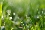 Small drops of dew on fresh green grass in the morning