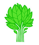 Green Plant / Tree