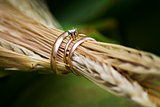 Close-up of wedding rings in the ears of wheat