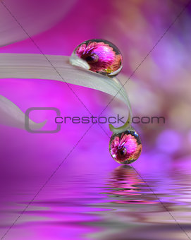 Abstract macro photo with water drops.Artistic Background for desktop. Flowers made with pastel tones.Tranquil abstract closeup art photography.