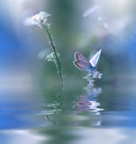 Blue Magic butterfly over water and wildflowers.
