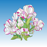 Flowers Of Blooming Apple Tree (Vector illustration)