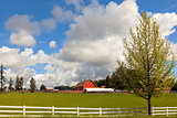 Cattle Ranch and Sheep Farm in Rural Oregon