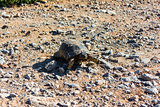 A turtle walking on the gravel