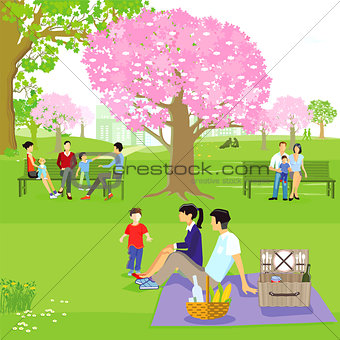 Spring with families at the cherry blossom