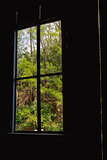 Window frame and nature