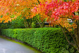 Strolling Path Lined with Japanese Maple Trees in Fall