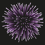 Fireworks lilac on a black background