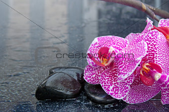 Spa background with pink orchid and black stone.