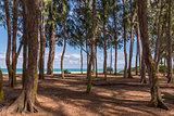 Waimanalo Beach, Oahu Hawaii through ironwood trees